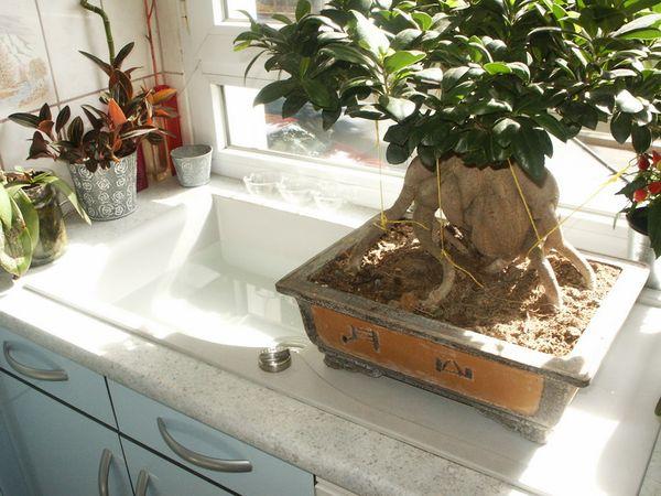 Comment arroser ses plantes d 39 appartement le pouvoir des for Comment tailler un potiron