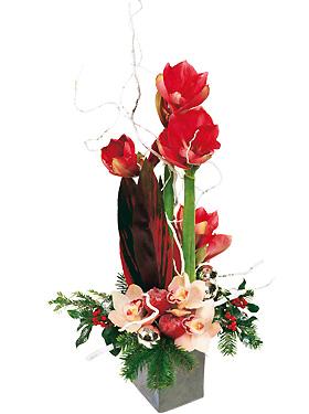 Bouquet etincelle le pouvoir des fleurs for Soigner amaryllis
