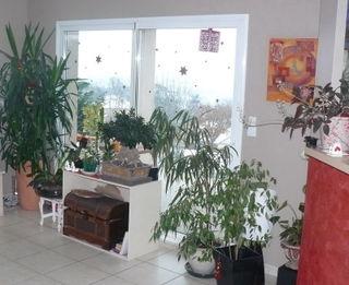 Plantes-vertes_03
