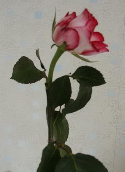 pour bien conserver vos bouquets de fleurs coup es le pouvoir des fleurs. Black Bedroom Furniture Sets. Home Design Ideas