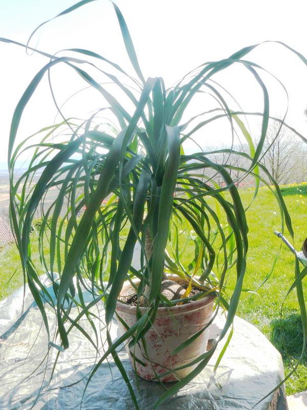 Rempoter ses plantes d'appartement - Le pouvoir des fleurs