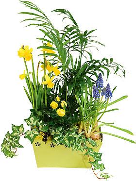 Interflora-bosquet