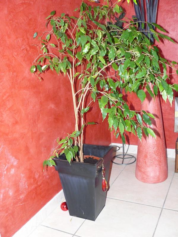 Ficus-fini