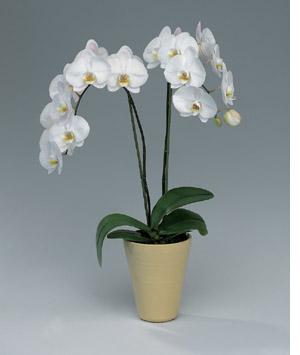 quelle plante offrir pour la f te des m res le pouvoir des fleurs. Black Bedroom Furniture Sets. Home Design Ideas