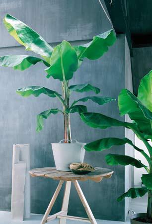 La green attitude, les plantes d\'intérieur version 2009 - Le pouvoir ...