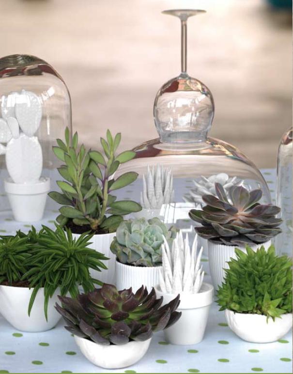 Plantes-petites