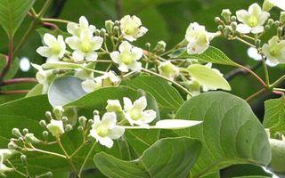 Floraison2006