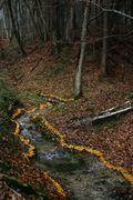 Landart_feuilles-ruisseau