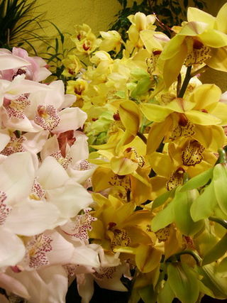 Cymbidium-branches