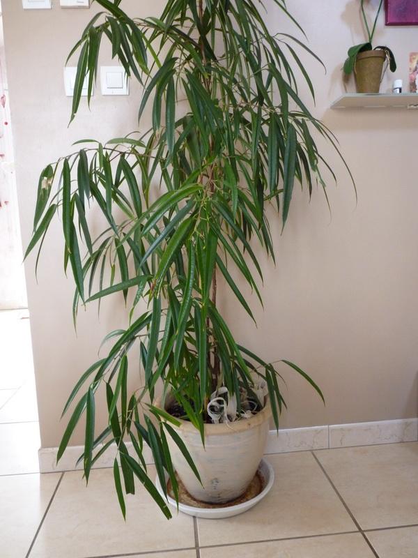Arroser correctement ses plantes d 39 appartement le - Plante verte d appartement ...
