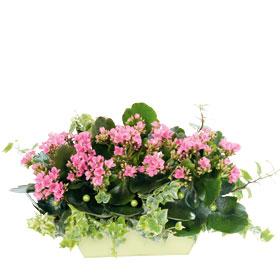 Le pouvoir des fleurs mars 2010 - Petites plantes d interieur ...