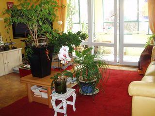 Plantes_001