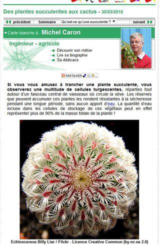 Pl succulentes