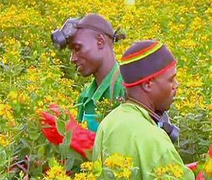 Fleurs-kenya_1