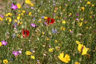 Fleurs sauvages-2