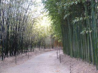 Bambou_03