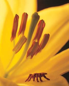 5 conseils pratiques pour bien conserver vos liliums le pouvoir des fleurs. Black Bedroom Furniture Sets. Home Design Ideas