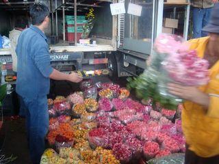 Sao-paulo-fleurs