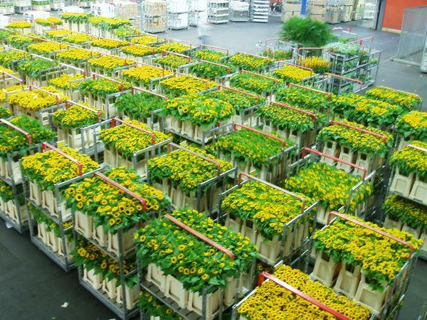 5 conseils pour conserver vos fleurs de tournesol ou h lianthus le pouvoir des fleurs. Black Bedroom Furniture Sets. Home Design Ideas