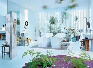 Plante_salle_de_bains_02