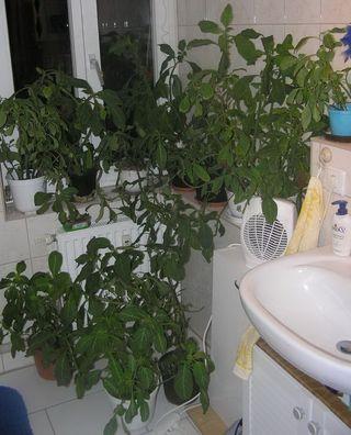 des plantes dans votre salle de bains le pouvoir des fleurs. Black Bedroom Furniture Sets. Home Design Ideas