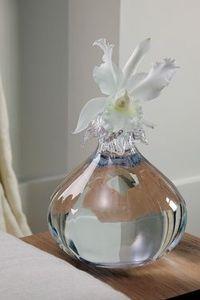 Orchidee_cattleya