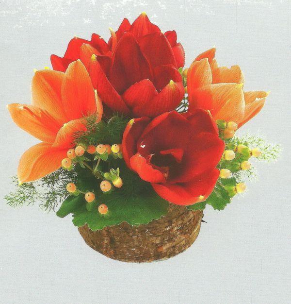 Hyppeastrum ou amaryllis images le pouvoir des fleurs for Soigner amaryllis