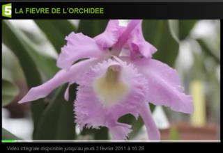 Orchidee-F5_01