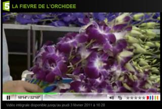 Fr5-orchidées-dendros