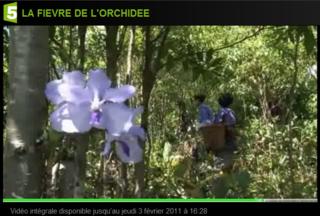 Fr5-orchidée_04