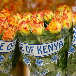 Roses-kenya