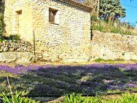 Violettes-bastide_2