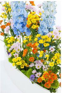 Justchrys-printemps_hauteur