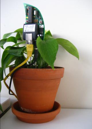 Botanical-plante