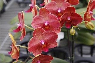 Floralies taipei_1