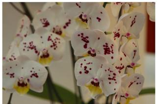 Floralies_taipei_2