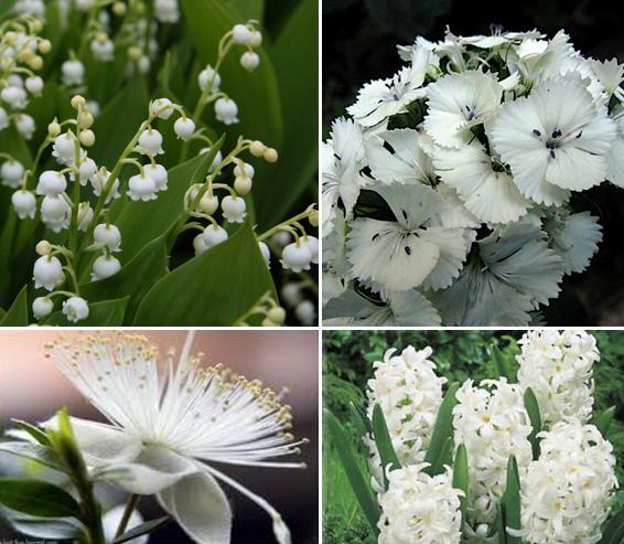 Kate fleurs