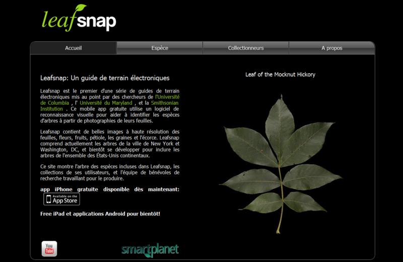 Leaf_snap_capture