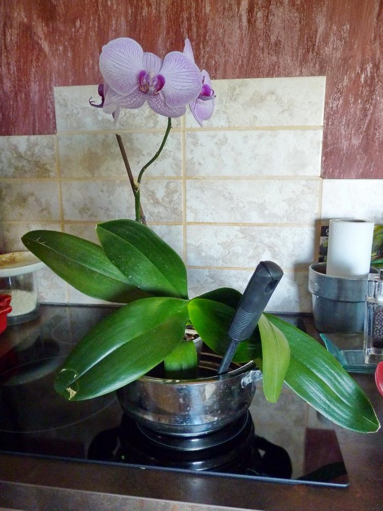 Orchidée-cuisine