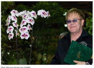 Orchidée_Elton_John