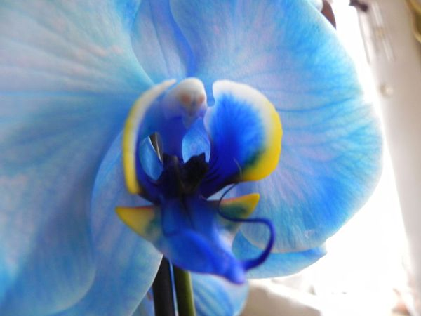 orchidee qui change de couleur