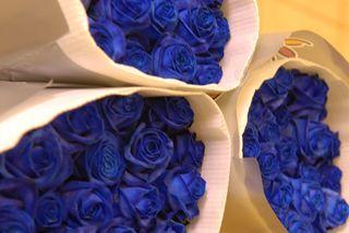 Rose_bleue