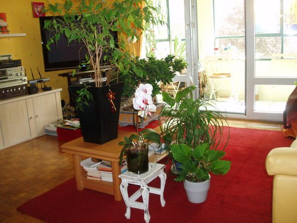 conseils pour conserver vos plantes vertes pendant vos vacances le pouvoir des fleurs. Black Bedroom Furniture Sets. Home Design Ideas
