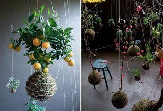 String-jardin_1