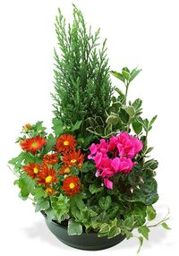 Interflora-coupe-plantes-variees