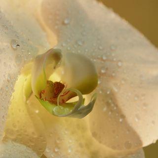 Fleur-mystere_04_01