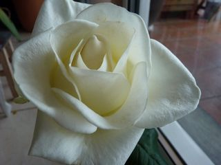 Rose après-ski_01