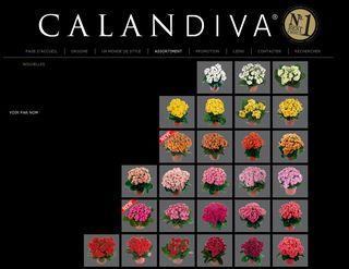 site sur les Calandivas