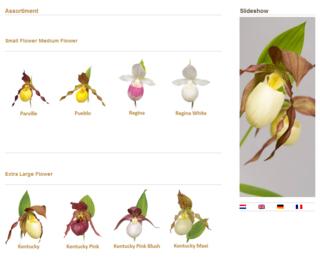 Orchidee-jardin