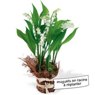 Interflora-cliariere